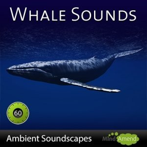 Whale-Sounds