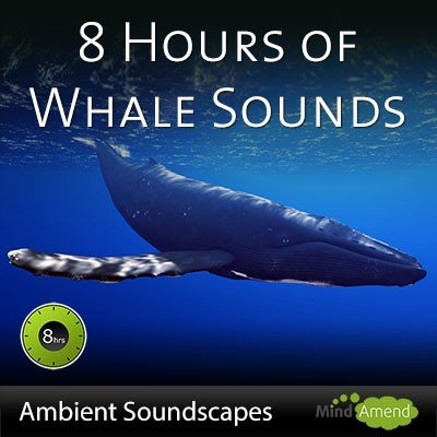 8 Hours of whale sounds in deep water