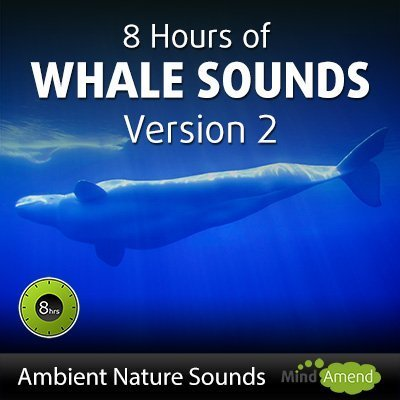 8 hours of whale sounds version 2